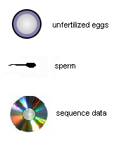 Unfertilized eggs, 	sperm and sequence data
