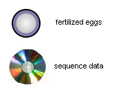 Fertilized eggs and sequence data