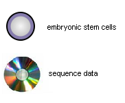 Embryonic stem cells and sequence data